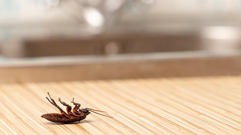 Is Preventative Pest Control A Good Idea?